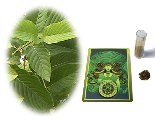 Kratom Pills Wholesale Welches