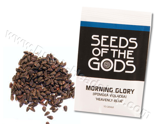 Morning Glory seeds (10 grams) - Heavenly Blue