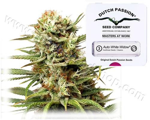 White Widow autoflower feminized (3 seeds) Dutch Passion