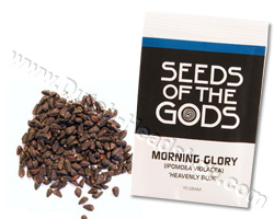 Morning Glory seeds (10 grams) - Heavenly Blue - Special Seeds ...