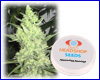 Amnesia Haze feminized (5 seeds) Private Label