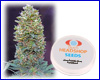 Auto Bubble Gum feminized (5 seeds) Private Label