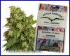 AutoXtreme autoflower feminized (3 seeds) Dutch Passion