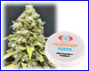 CBD Critical Mass feminized (5 seeds) Private Label