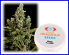 Cheese feminized (5 seeds) Private Label