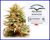 ComPassion feminized (5 seeds) Dutch Passion