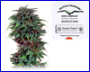 Durban Poison feminized (5 seeds) Dutch Passion