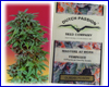 Durban Poison feminized (10 seeds) Dutch Passion