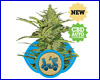 Fast Eddy Automatic feminized (5 seeds) royal queen