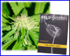Hollands Hope feminized (5 seeds) kulu