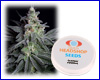 Jack Herer feminized (5 seeds) Private Label