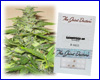 Lowryder #2 autoflower feminized (3 seeds) Joint Doctors