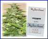 Lowryder #2 autoflower feminized (5 seeds) Joint Doctors