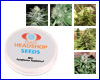 Mix autoflower feminized (5 seeds) Private Label
