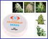 Mix feminized (5 seeds) Private Label