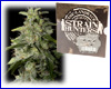 Money Maker feminized (5 seeds) Strain Hunters
