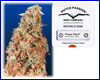 Power Plant feminized (5 seeds) Dutch Passion