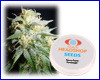 Power Plant feminized (10 seeds) Private Label