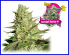 Special Queen #1 feminized (3 seeds) royal queen