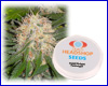Sweet Bubble feminized (5 seeds) Private Label