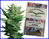 Think Different autoflower feminized (3 seeds) Dutch Passion
