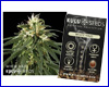 White Haze feminized (5 seeds) Kulu Seeds