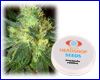 White Russian feminized (5 seeds) Private Label