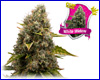 White Widow feminized (5 seeds) royal queen