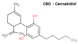 Cannabidiol Oil For Cancer Patients