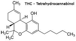 No THC oil